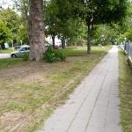 2020-05-30_Angerpflege_02