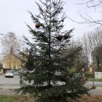 2020-11-27_Weihnachtsbaum_02