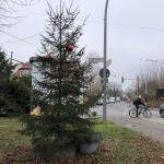 2020-11-27_Weihnachtsbaum_03