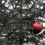 2020-11-27_Weihnachtsbaum_04