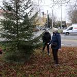 2020-11-27_Weihnachtsbaum_06